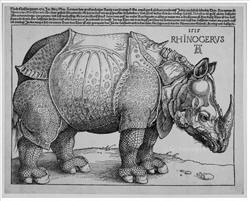 Albrecht Duerer, The Rhinoceros, 1515, Woodcut.